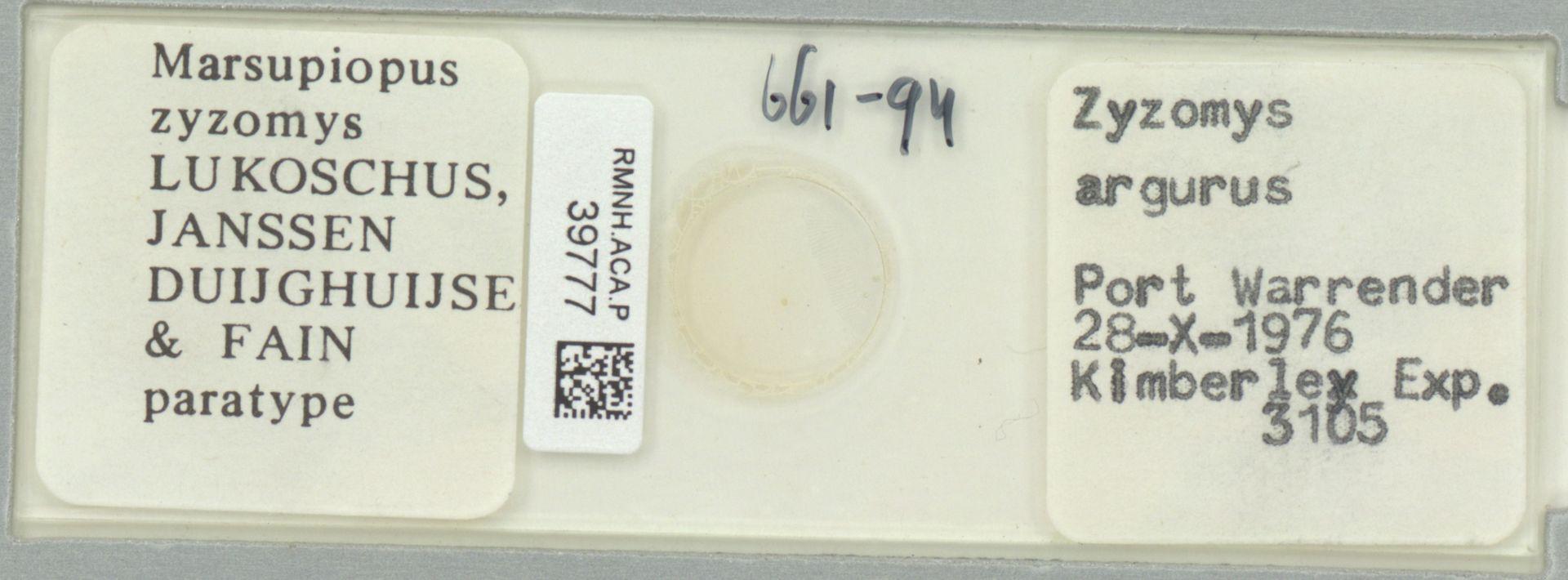 RMNH.ACA.P.39777 | Marsupiopus zyzomys Lukoschus, Janssen Duijghuijzen & Fain