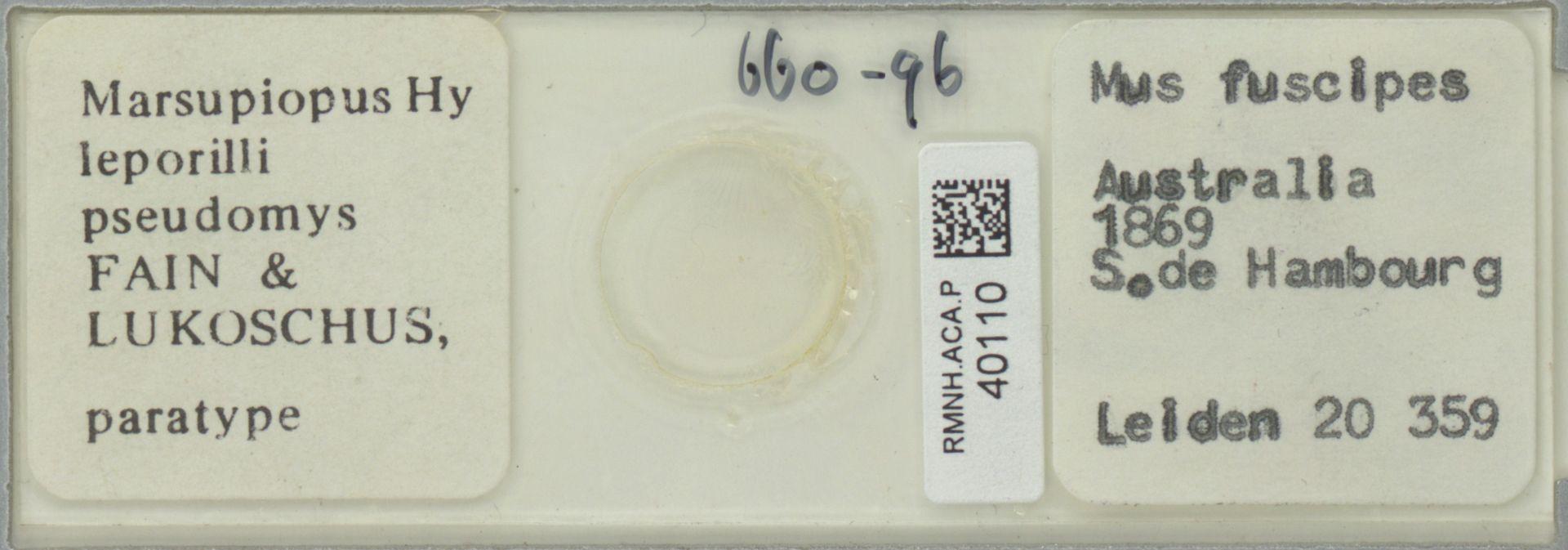 RMNH.ACA.P.40110 | Marsupiopus leporilli pseudomys Fain & Lukoschus
