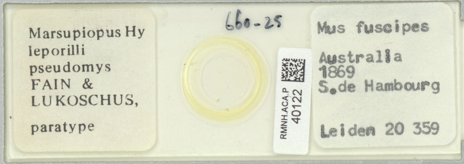 RMNH.ACA.P.40122 | Marsupiopus leporilli pseudomys Fain & Lukoschus