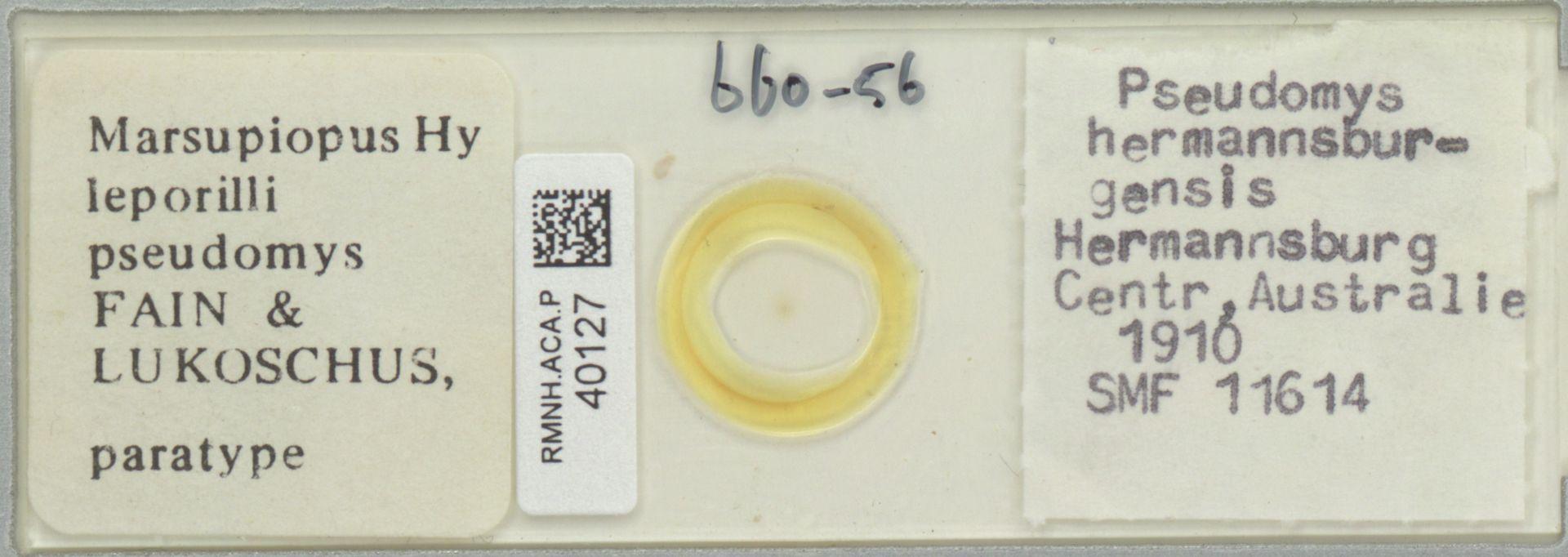 RMNH.ACA.P.40127   Marsupiopus (Hy) leporilli pseudomys Fain & Lukoschus
