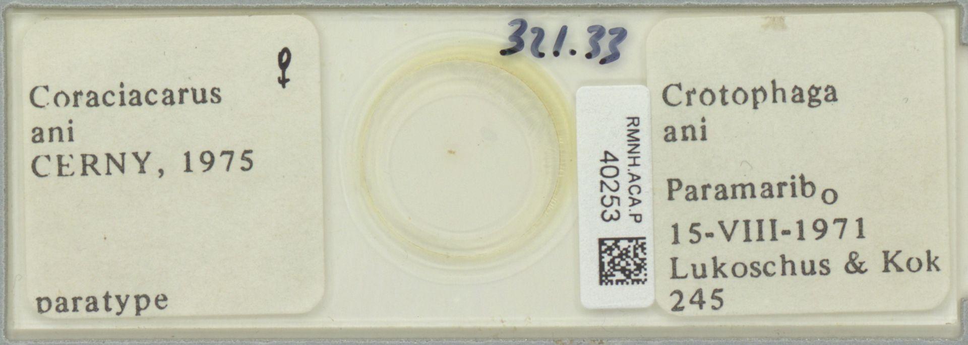 RMNH.ACA.P.40253 | Coraciacarus ani Cerny, 1975