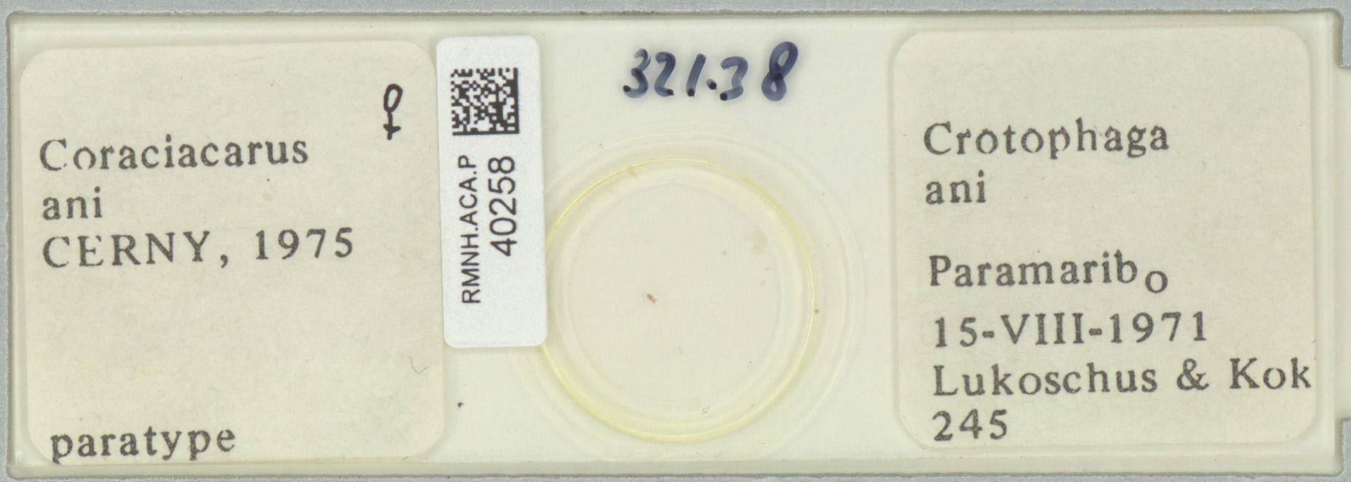 RMNH.ACA.P.40258   Coraciacarus ani Cerny, 1975