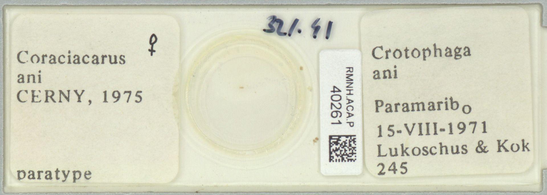 RMNH.ACA.P.40261 | Coraciacarus ani Cerny, 1975