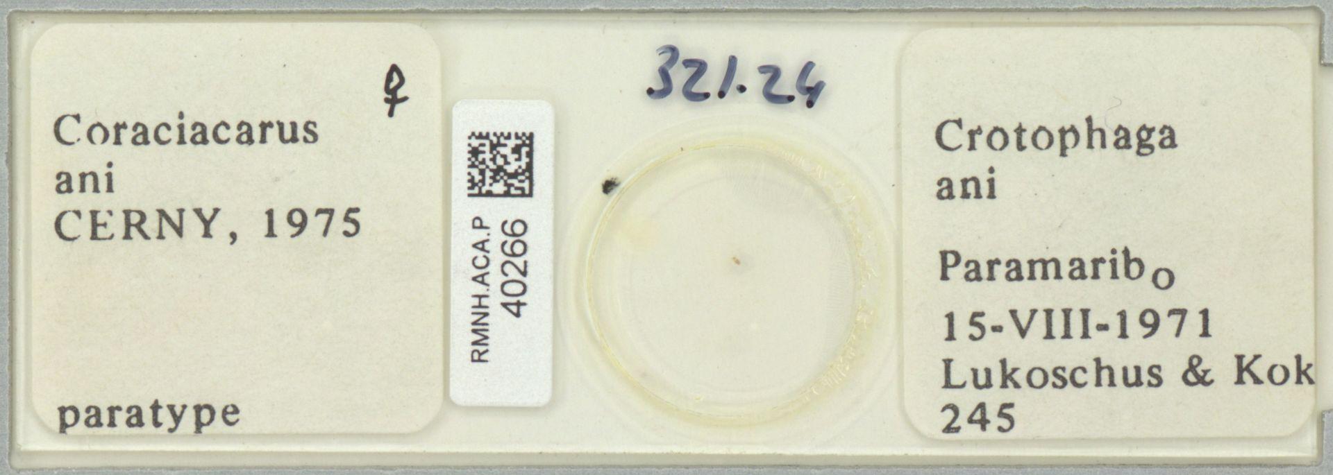 RMNH.ACA.P.40266 | Coraciacarus ani Cerny, 1975