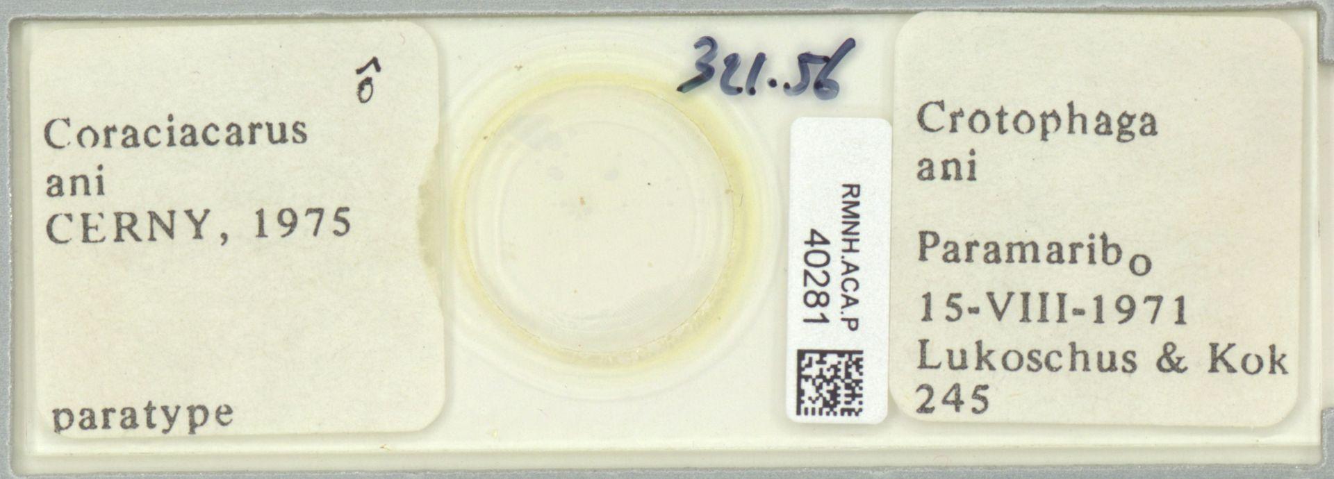 RMNH.ACA.P.40281 | Coraciacarus ani Cerny, 1975