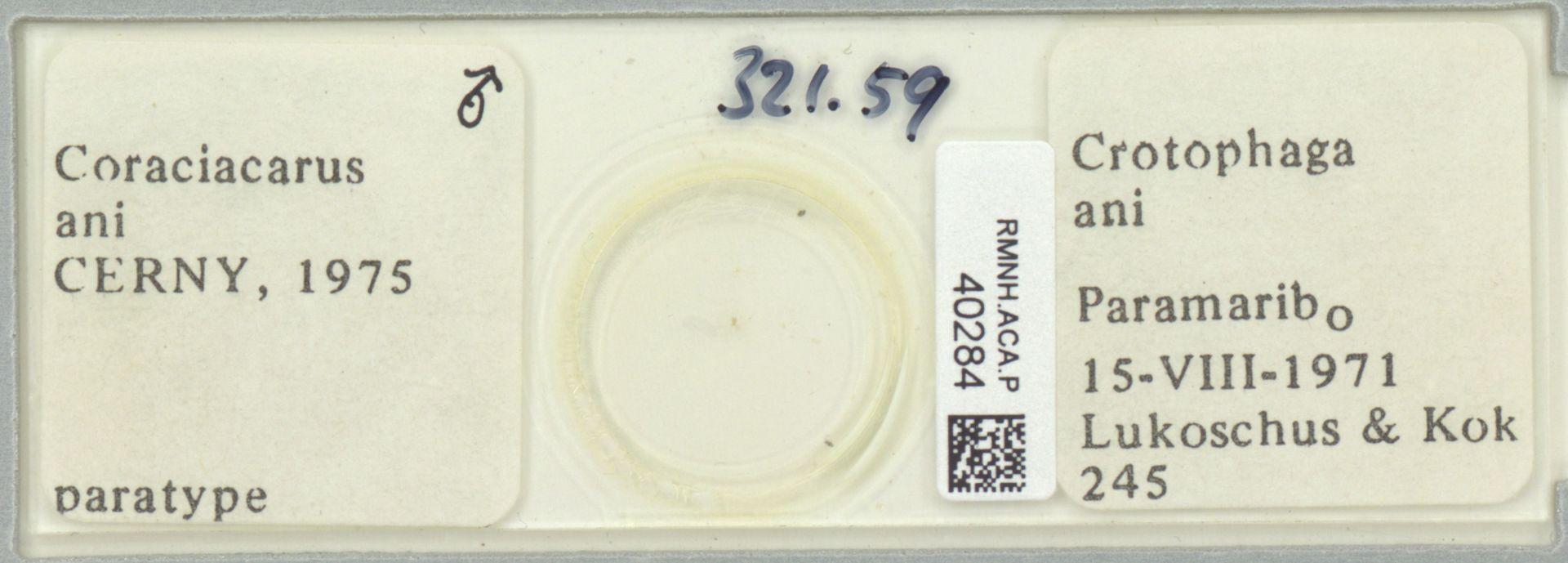 RMNH.ACA.P.40284 | Coraciacarus ani Cerny, 1975