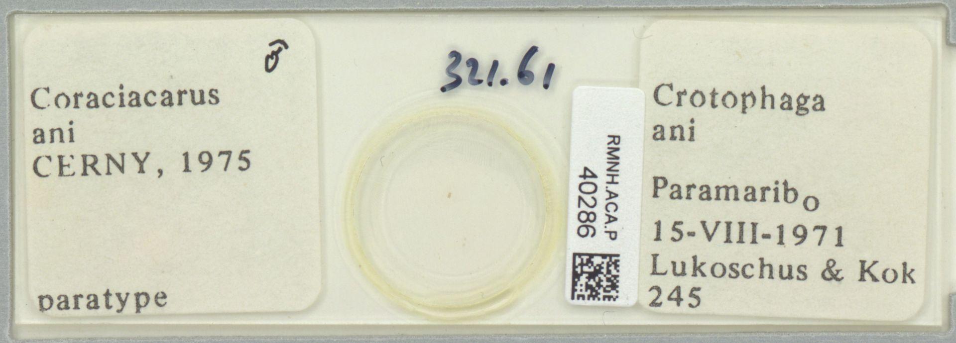 RMNH.ACA.P.40286   Coraciacarus ani Cerny, 1975