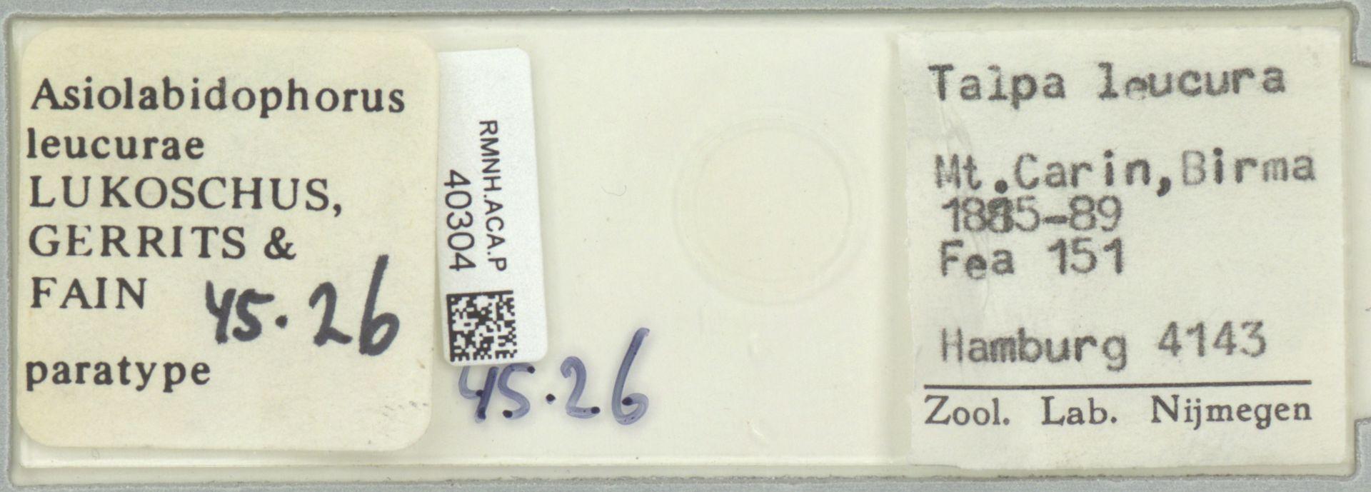 RMNH.ACA.P.40304   Asiolabidophorus leucurae Lukoschus, Gerrits & Fain