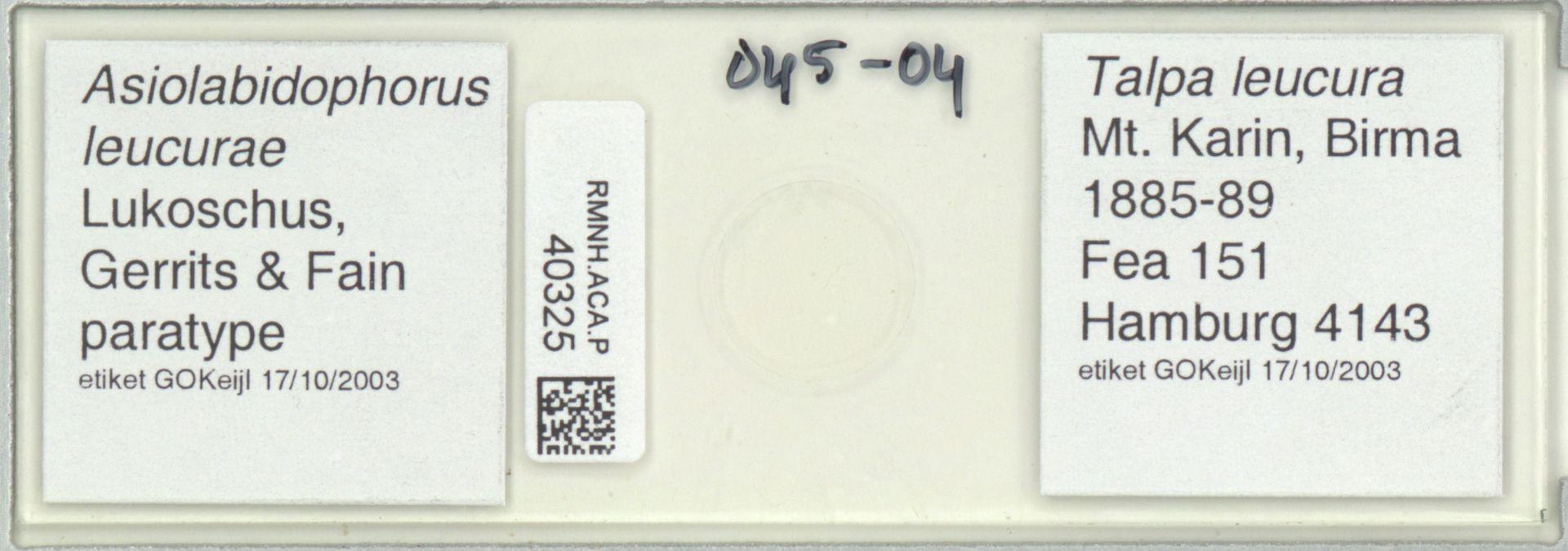 RMNH.ACA.P.40325   Asiolabidophorus leucurae Lukoschus, Gerrits & Fain