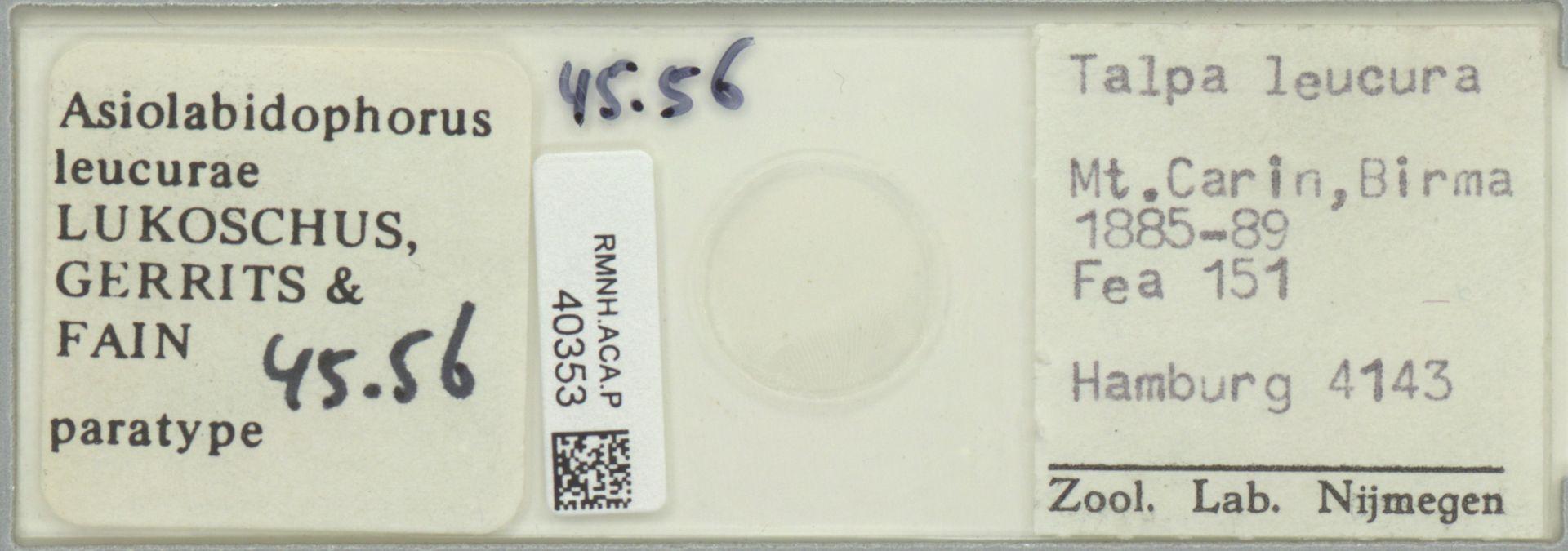 RMNH.ACA.P.40353 | Asiolabidophorus leucurae Lukoschus, Gerrits & Fain