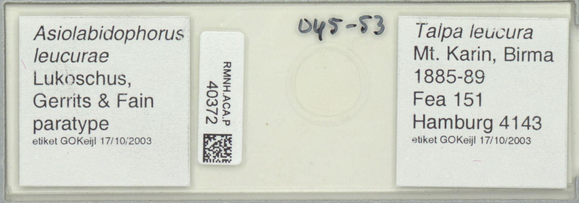 RMNH.ACA.P.40372 | Asiolabidophorus leucurae Lukoschus, Gerrits & Fain