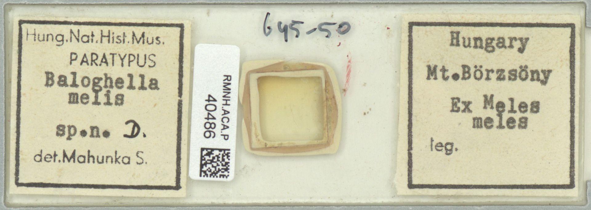 RMNH.ACA.P.40486   Baloghella melis