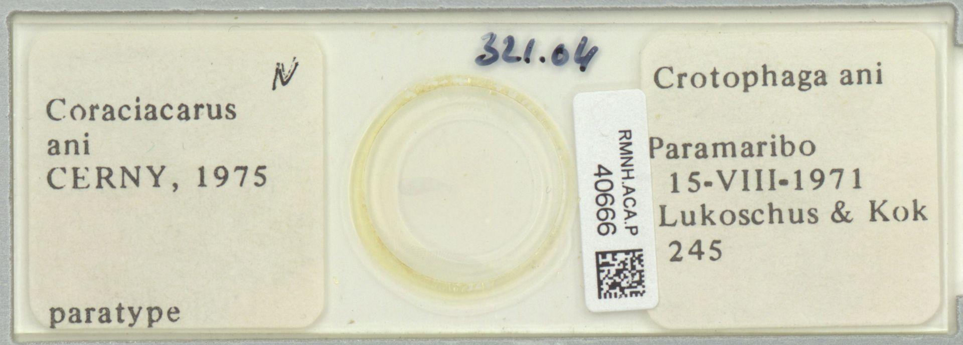RMNH.ACA.P.40666 | Coraciacatus ani Cerny, 1975