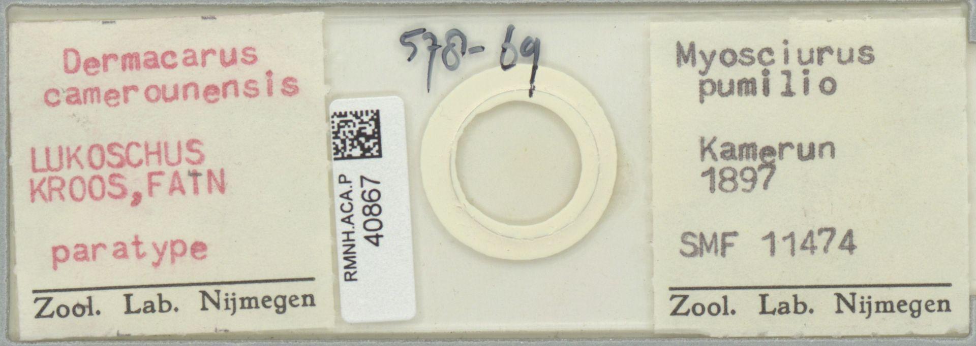 RMNH.ACA.P.40867 | Dermacarus camerounensis Lukoschus Kroos, Fain