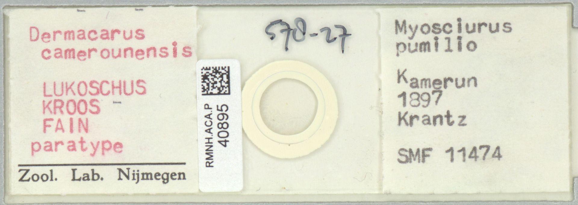 RMNH.ACA.P.40895 | Dermacarus camerounensis Lukoschus Kroos Fain