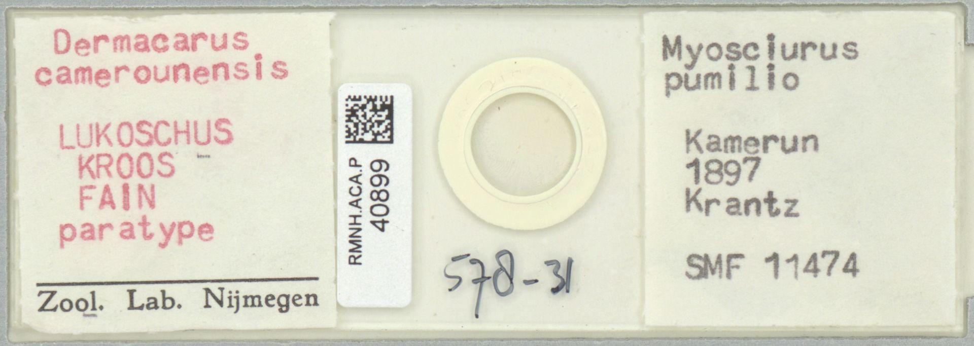 RMNH.ACA.P.40899 | Dermacarus camerounensis LUKOSCHUS KROOS FAIN