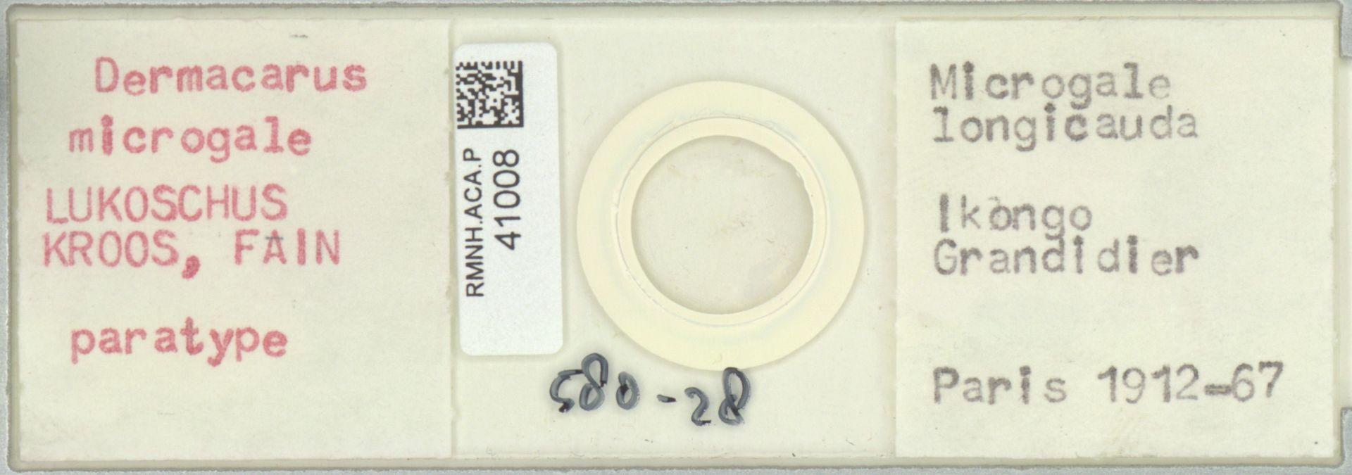 RMNH.ACA.P.41008 | Dermacarus microgale Lukoschus, Kroos, Fain