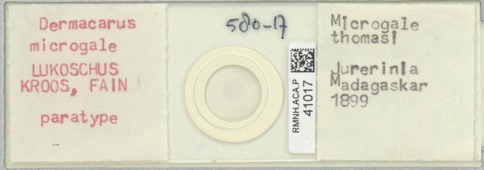 RMNH.ACA.P.41017 | Dermacarus microgale Lukoschus, Kroos & Fain