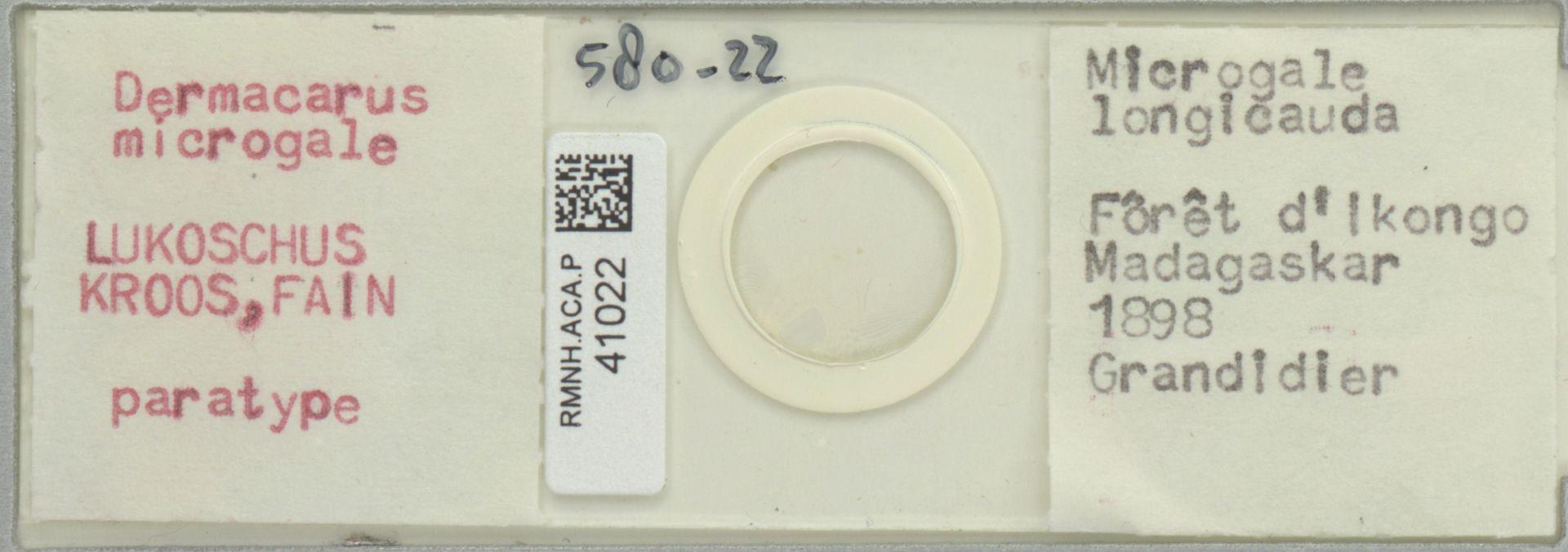 RMNH.ACA.P.41022 | Dermacarus microgale Lukoschus, Kroos & Fain