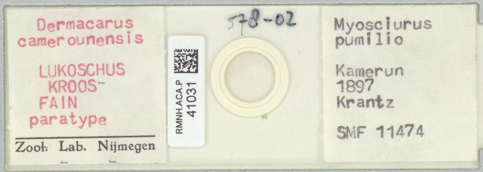 RMNH.ACA.P.41031 | Dermacarus camerounensis Lukoschus, Kroos & Fain