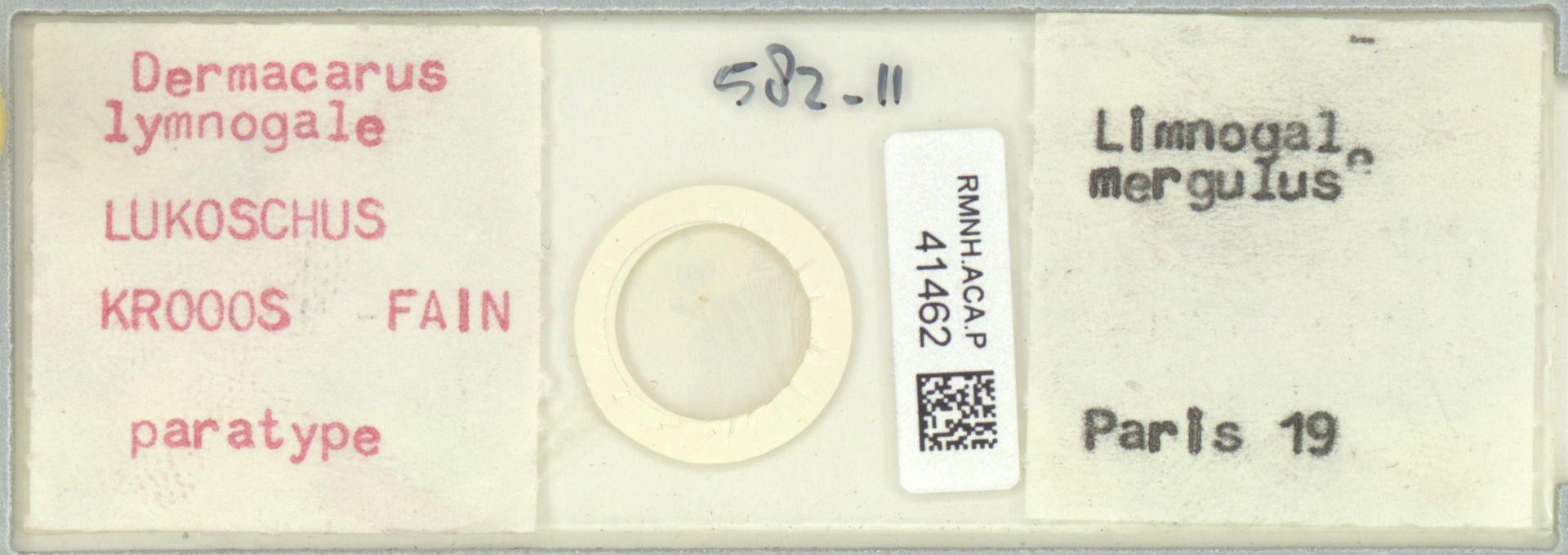 RMNH.ACA.P.41462   Dermacarus lymnogale Lukoschus, Kroos, Fain
