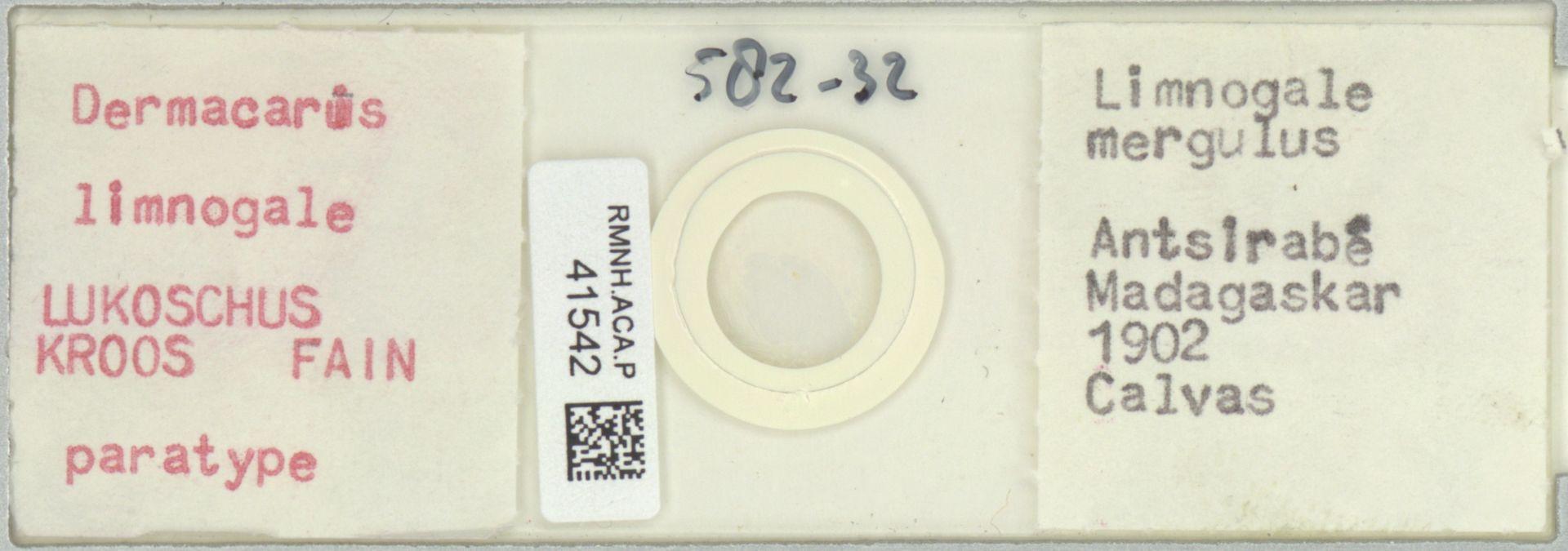 RMNH.ACA.P.41542 | Dermacarus limnogale Lukoschus, Kroos, Fain