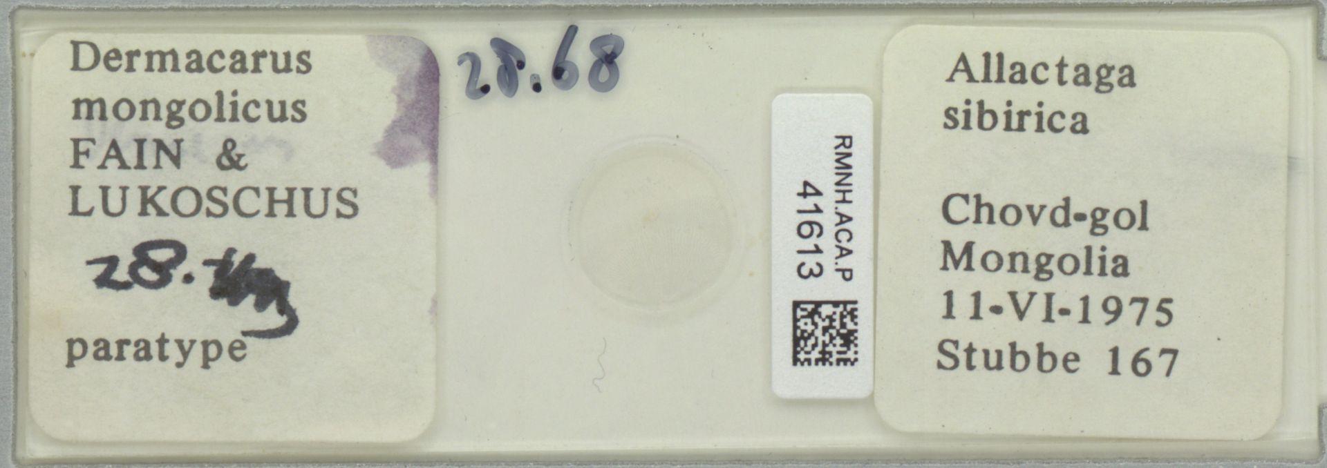 RMNH.ACA.P.41613 | Dermacarus mongolicus Fain & Lukoschus