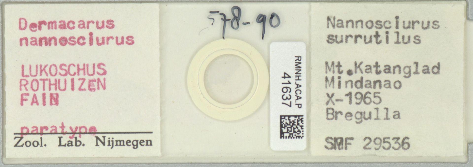 RMNH.ACA.P.41637   Dermacarus nannosciurus Lukoschus, Rothuizen, Fain