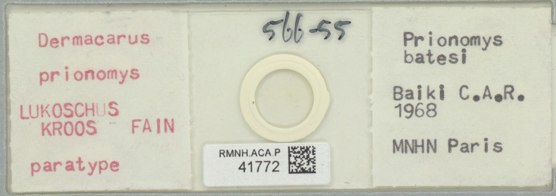 RMNH.ACA.P.41772 | Dermacarus prionomys Lukoschus, Kroos, Fain