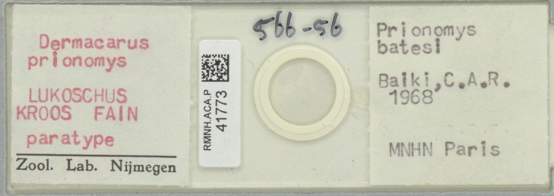 RMNH.ACA.P.41773   Dermacarus prionomys Lukoschus, Kroos & Fain