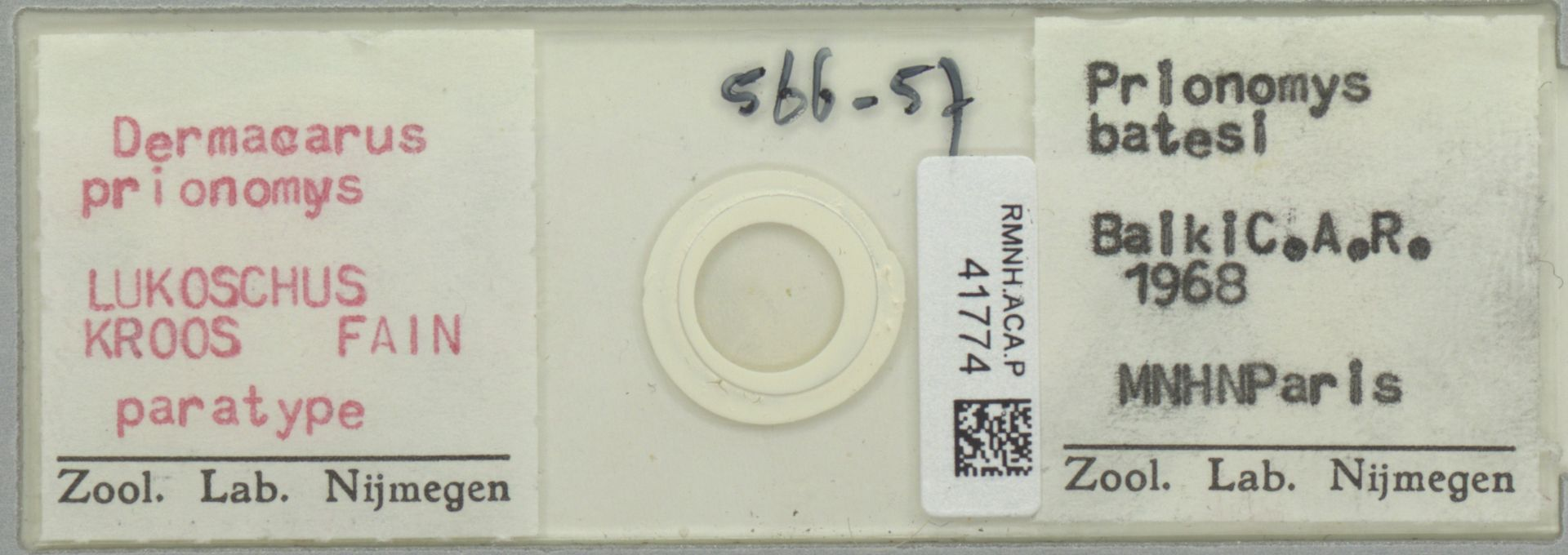 RMNH.ACA.P.41774 | Dermacarus prionomys Lukoschus, Kroos, Fain