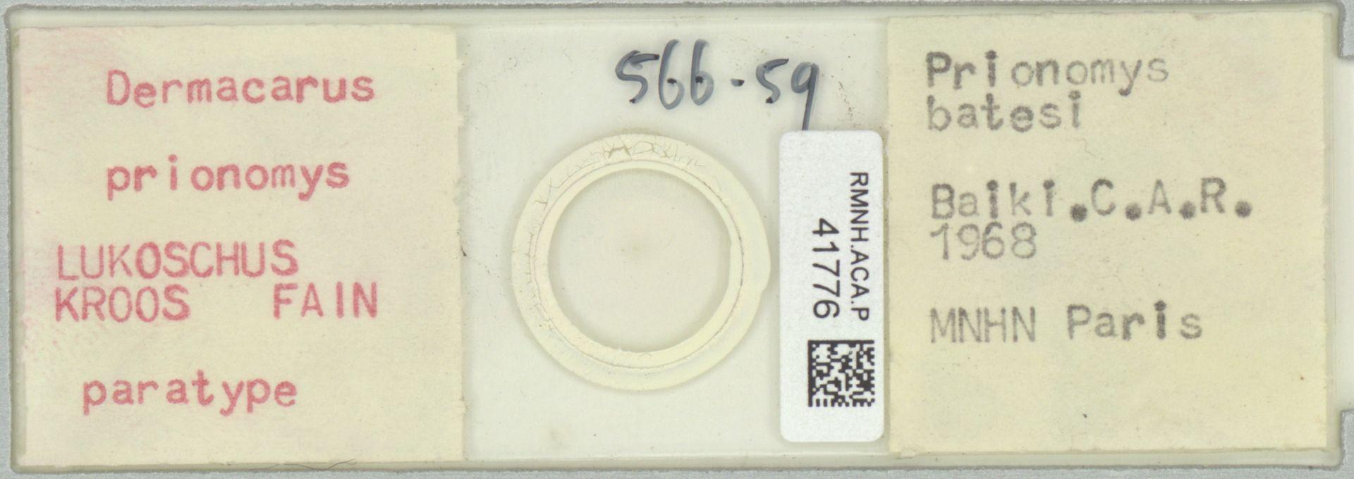 RMNH.ACA.P.41776 | Dermacarus prionomys Lukoschus, Kroos & Fain