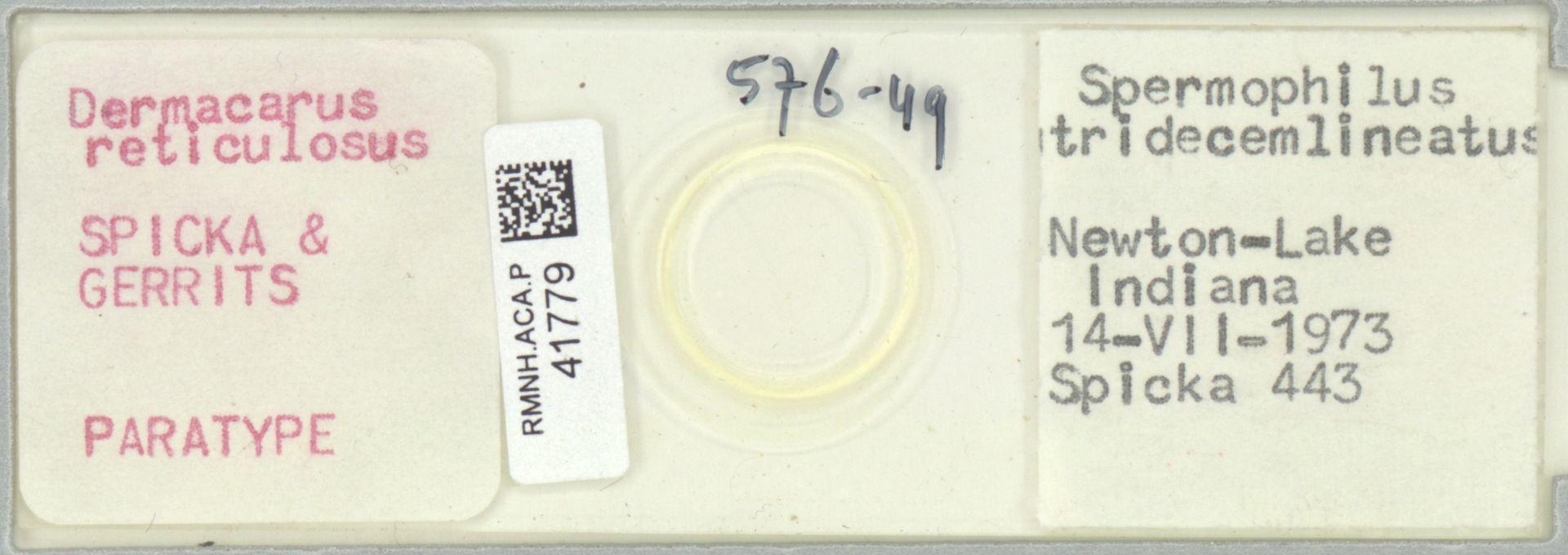 RMNH.ACA.P.41779 | Dermacarus reticulosus Spicka & Gerrits