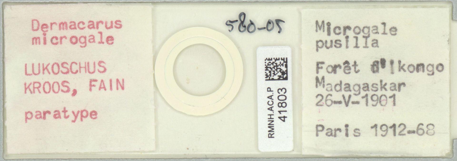 RMNH.ACA.P.41803 | Dermacarus microgale Lukoschus, Kroos & Fain