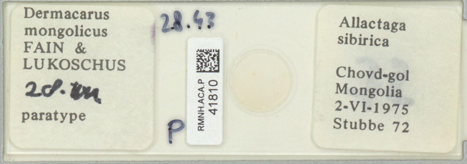 RMNH.ACA.P.41810 | Dermacarus mongolicus Fain & Lukoschus