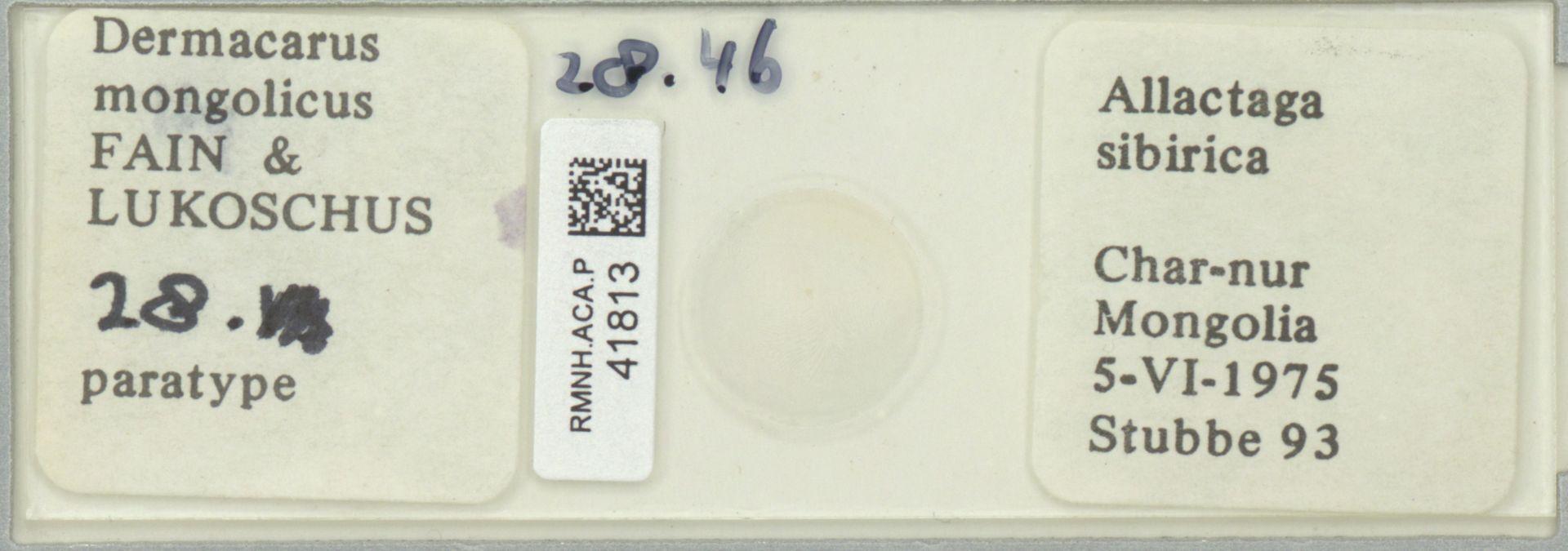 RMNH.ACA.P.41813   Dermacarus mongolicus Fain & Lukoschus