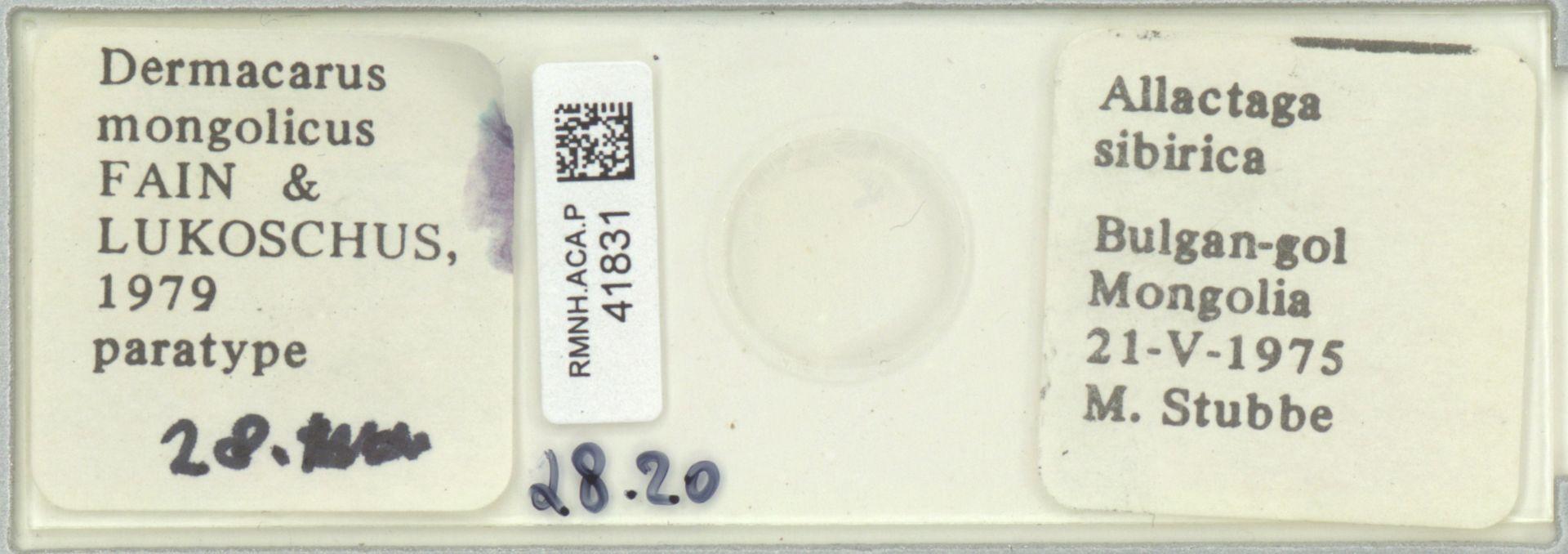 RMNH.ACA.P.41831   Dermacarus mongolicus Fain & Lukoschus, 1979