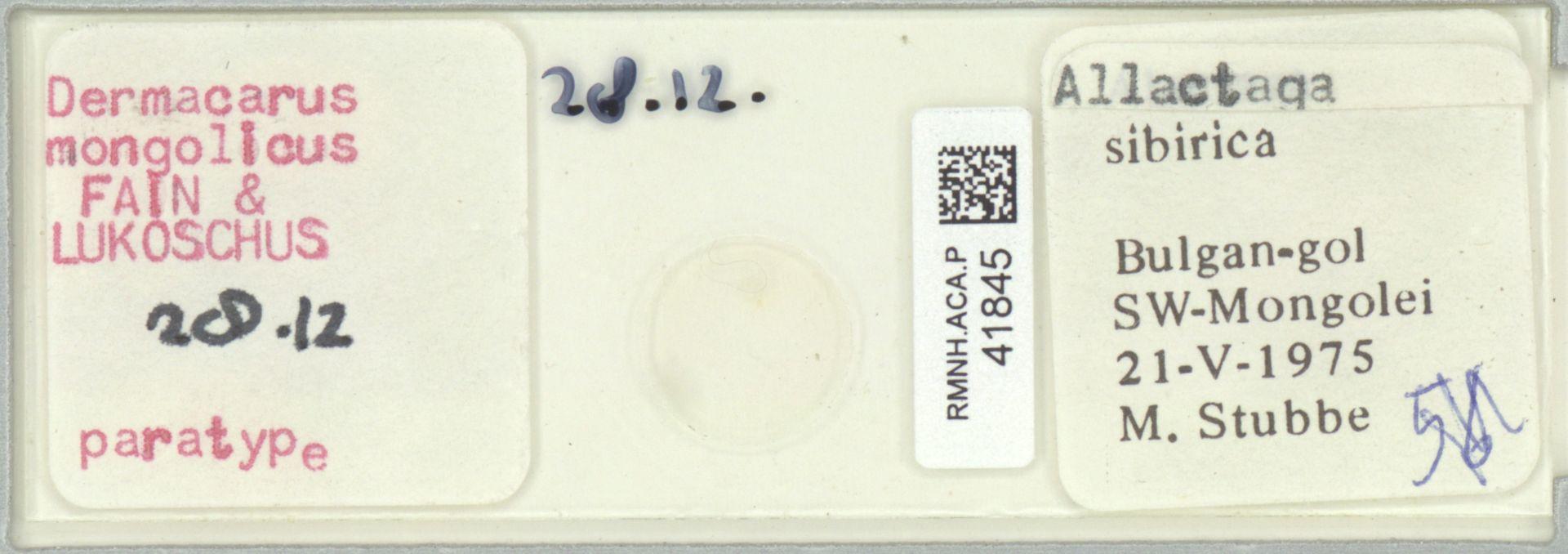 RMNH.ACA.P.41845   Dermacarus mongolicus Fain & Lukoschus