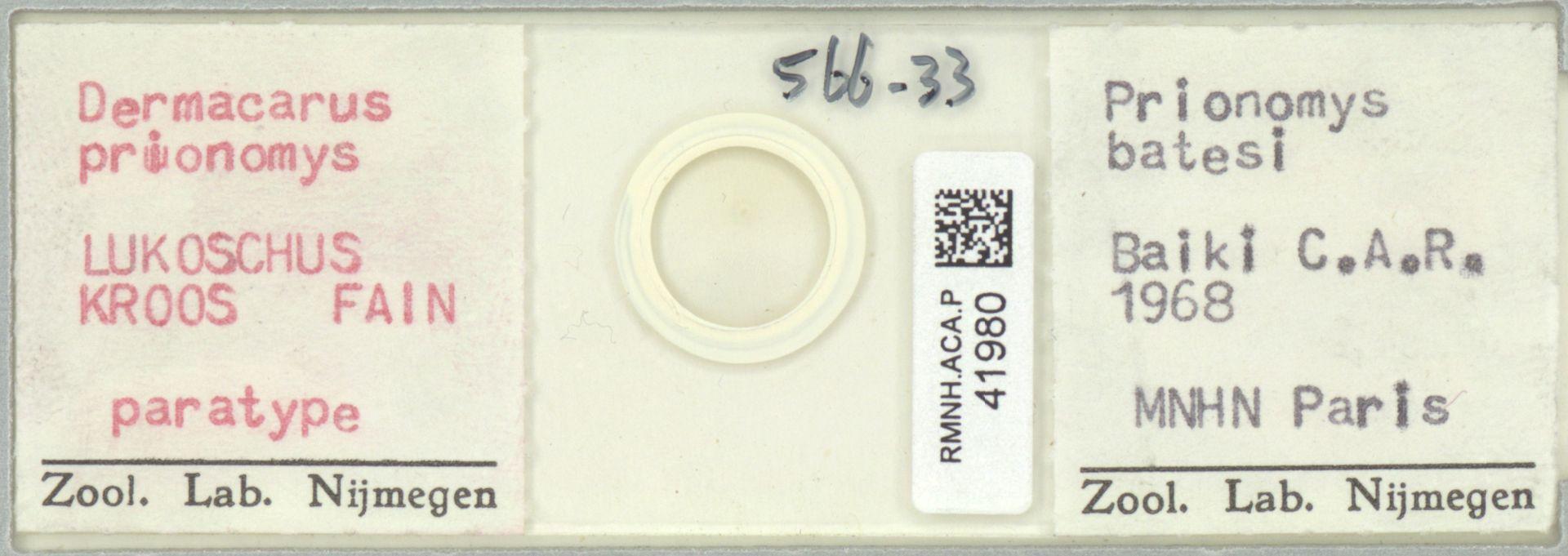 RMNH.ACA.P.41980 | Dermacarus prionomys Lukoschus, Kroos, Fain