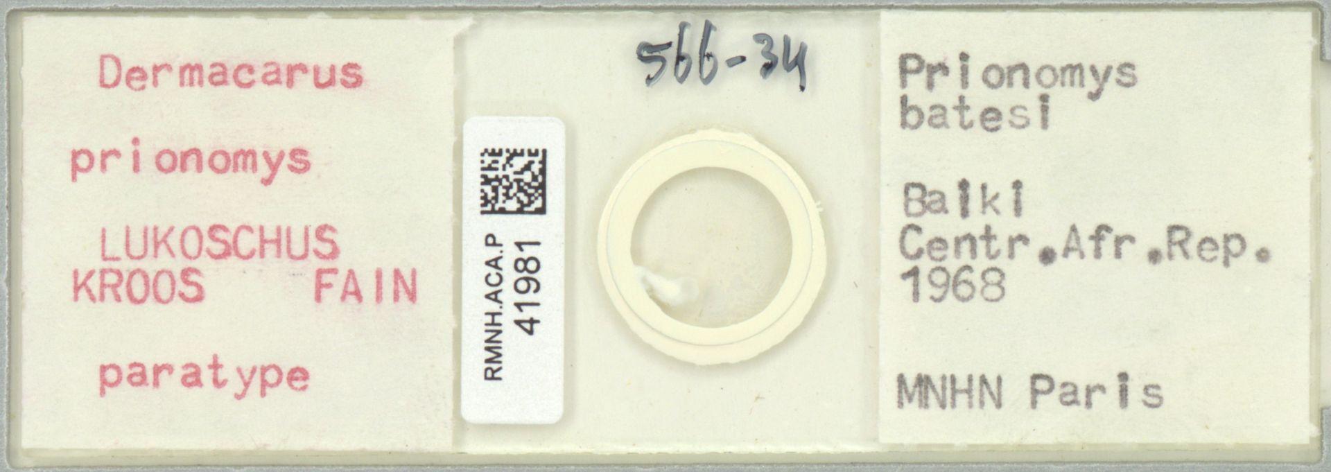 RMNH.ACA.P.41981 | Dermacarus prionomys Lukoschus, Kroos, Fain