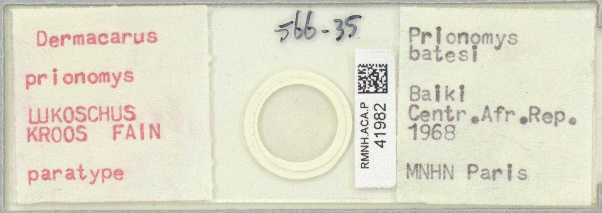 RMNH.ACA.P.41982 | Dermacarus prionomys Lukoschus, Kroos, Fain
