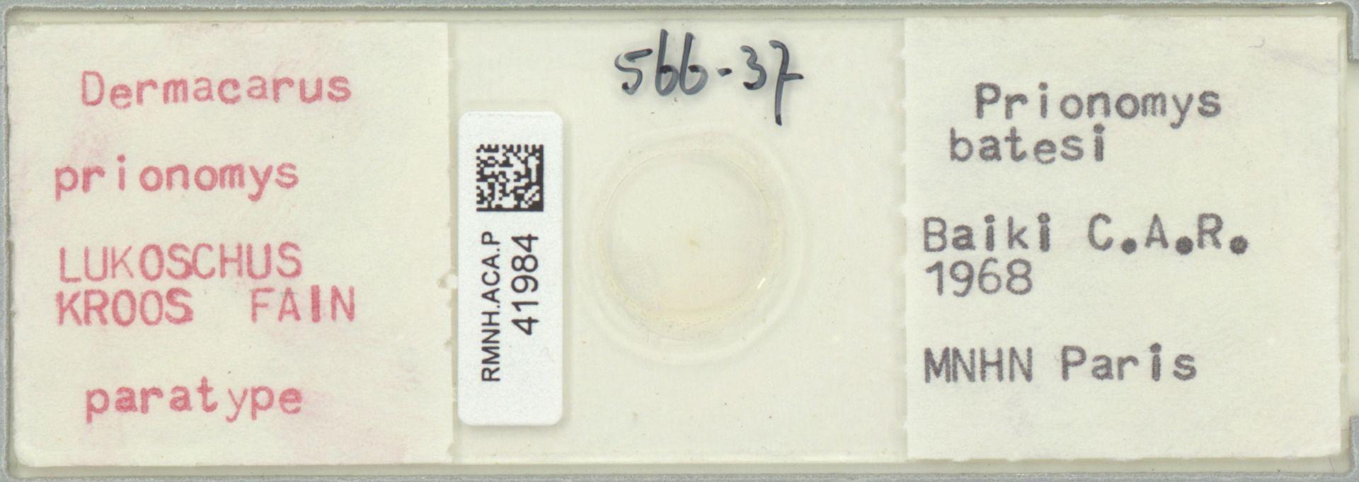 RMNH.ACA.P.41984 | Dermacarus prionomys Lukoschus Kroos Fain