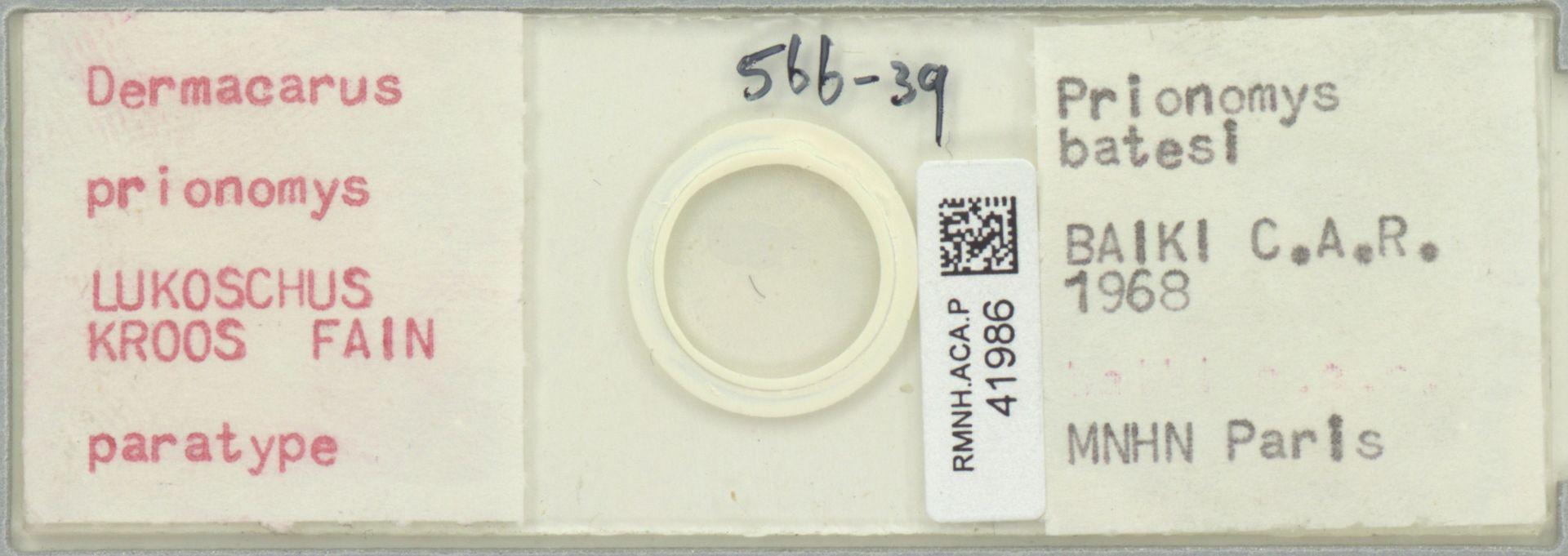 RMNH.ACA.P.41986 | Dermacarus prionomys Lukoschus, Kroos, Fain