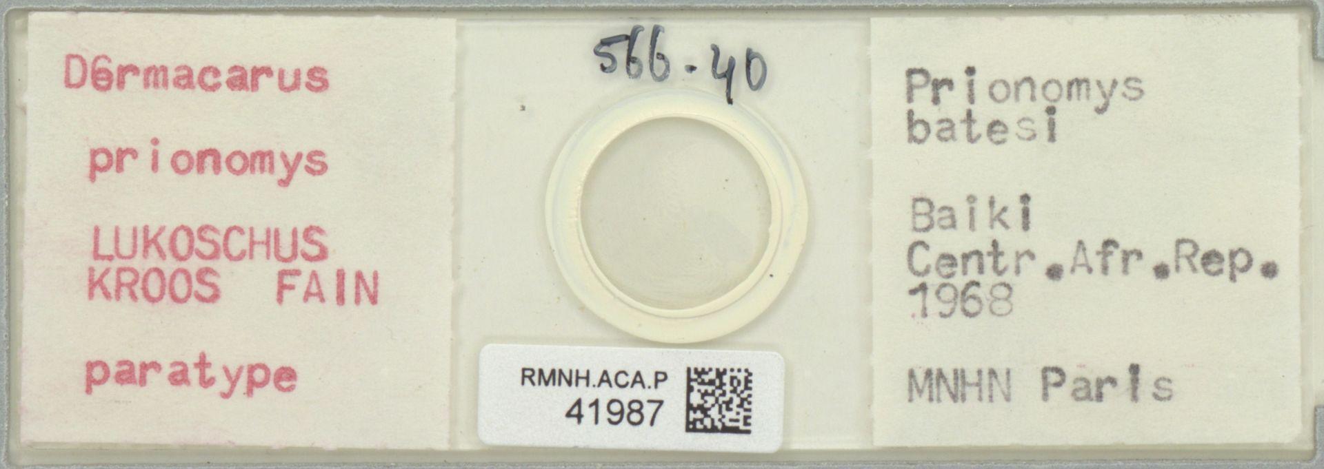 RMNH.ACA.P.41987 | Dermacarus prionomys Lukoschus, Kroos, Fain