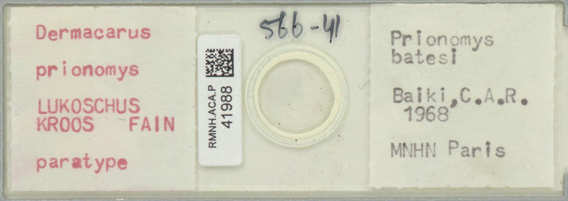 RMNH.ACA.P.41988 | Dermacarus prionomys Lukoschus, Kroos, Fain