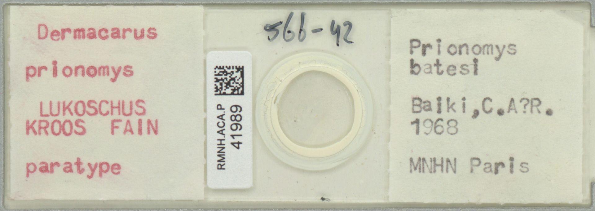 RMNH.ACA.P.41989 | Dermacarus prionomys Lukoschus, Kroos, Fain