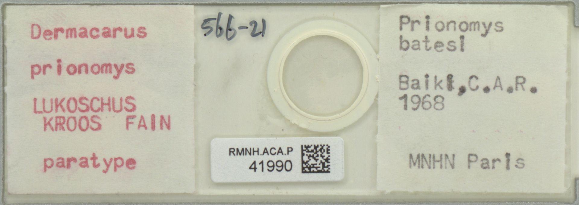 RMNH.ACA.P.41990 | Dermacarus prionomys Lukoschus, Kroos, Fain