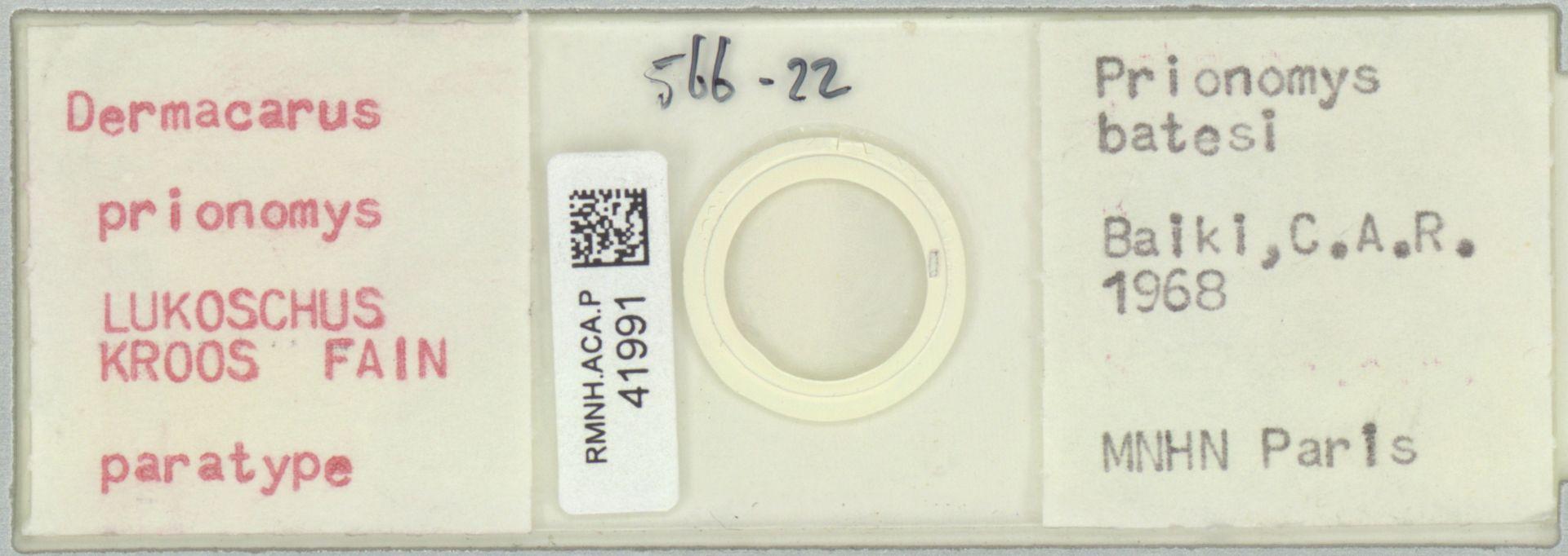 RMNH.ACA.P.41991 | Dermacarus prionomys Lukoschus, Kroos, Fain