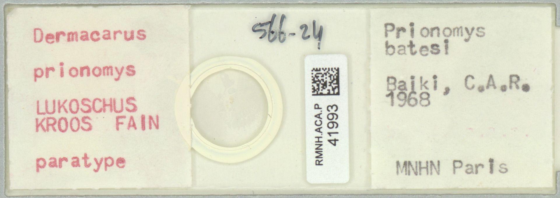 RMNH.ACA.P.41993 | Dermacarus prionomys Lukoschus, Kroos, Fain