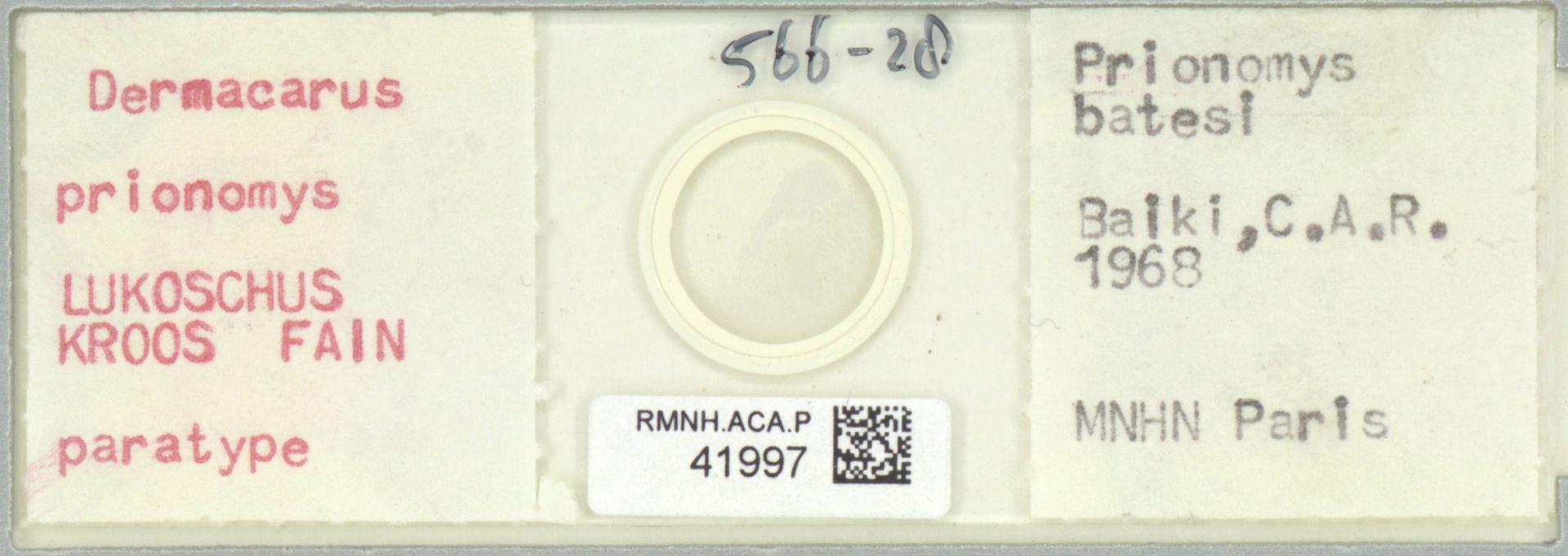 RMNH.ACA.P.41997 | Dermacarus prionomys Lukoschus Kroos Fain
